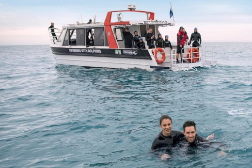 Akaroa-Canterbury-swimming-with-dolphins