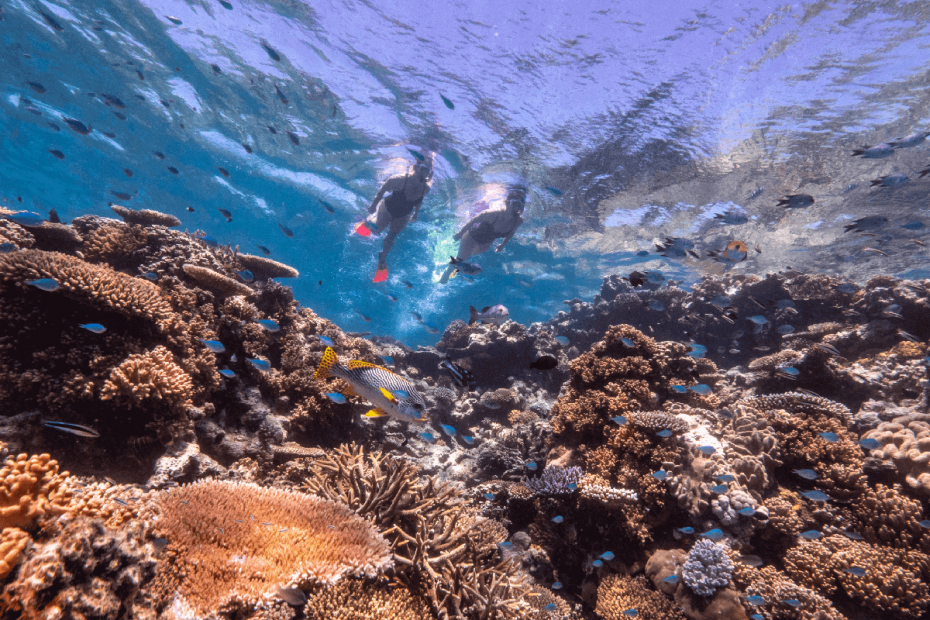 Great-barrier-reef-image-courtesy-of-tourism-and-events-queensland-1200x800