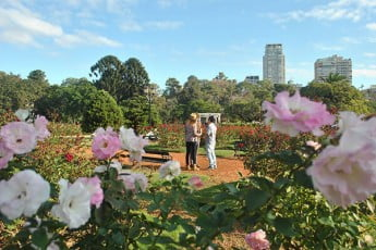 Roses in Bosques de Palermo, Buenos Aires, Argentina.