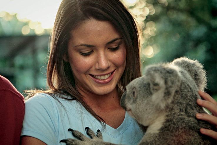 Cuddling koala, Lone Pine Sanctuary, Brisbane, Australia.