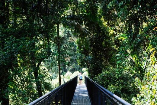 Tamborine Mountain Rainforest Skywalk, Gold Coast, Australia.