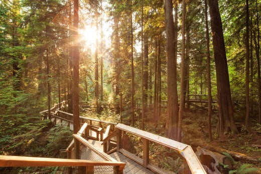 Boardwalk, Capilano Suspension Bridge Park, Vancouver, Canada.