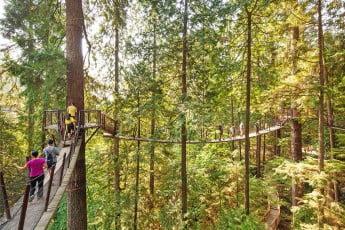 Treetops adventure, Capilano Suspension Bridge Park, Vancouver, Canada.