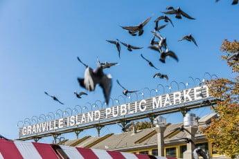 Birds flying over Granville Island Public Market, Vancouver, Canada.