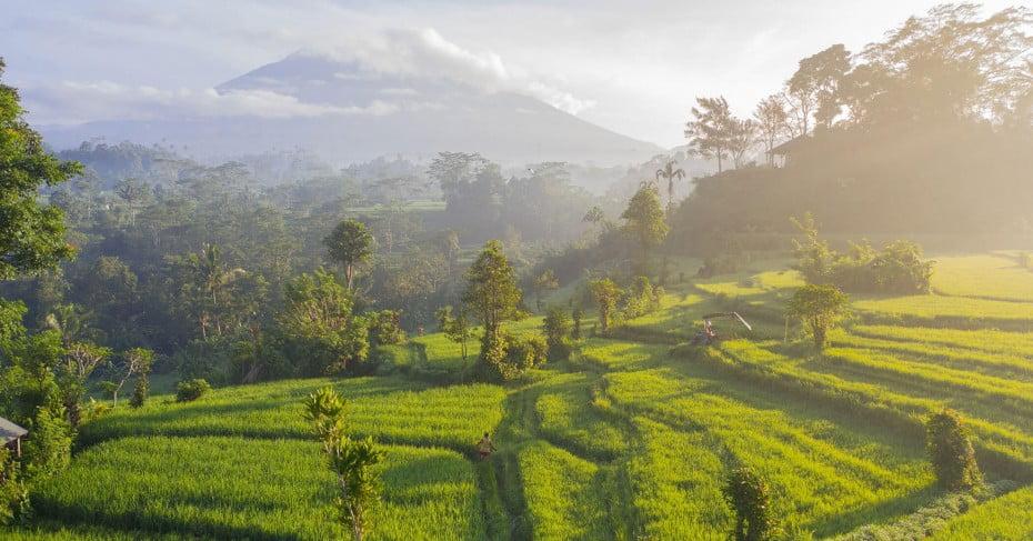 Rice field, Bali, Indonesia.