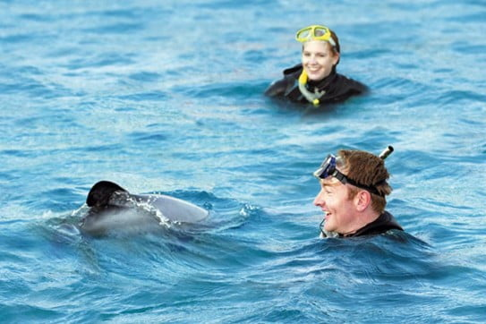 Swimming with Hector dolphins, New Zealand.