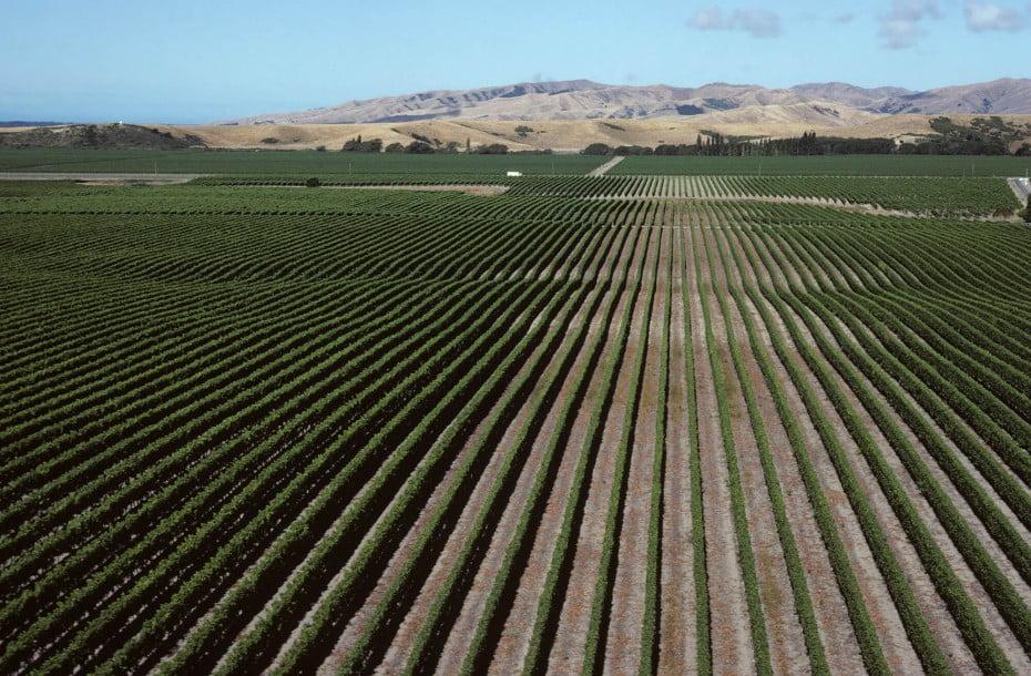 Vineyards, Blenheim, New Zealand.