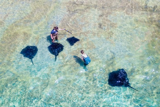 Stingrays from above, Gisborne, New Zealand