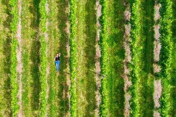 Woman in vineyard, Gisborne, New Zealand