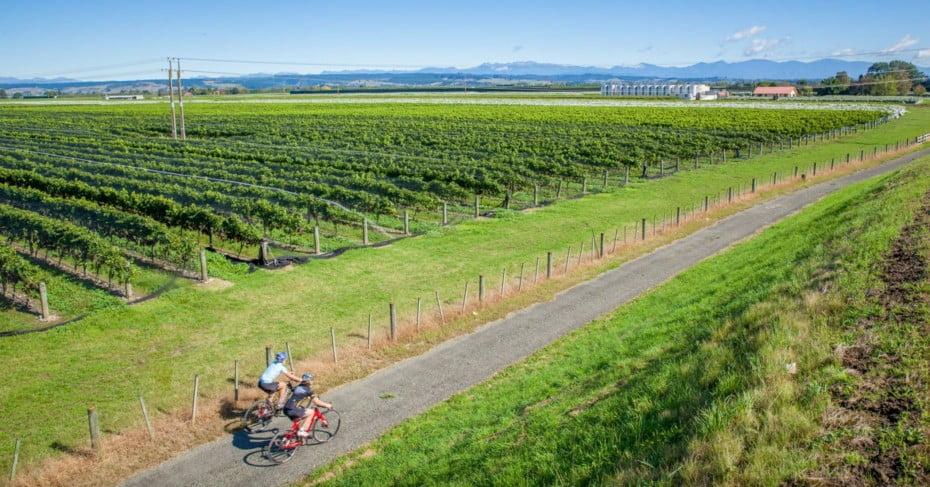Cyclists near Winery on Tasman's Great Taste Trail.