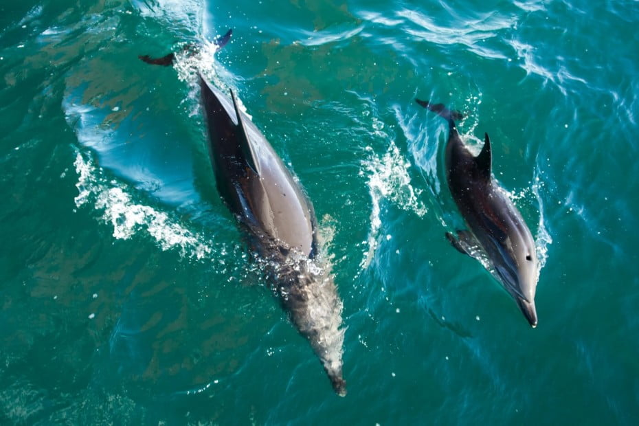 Expect to see plenty of different exotic marine life, including bottlenose dolphins, in the Hauraki Gulf Marine Park.