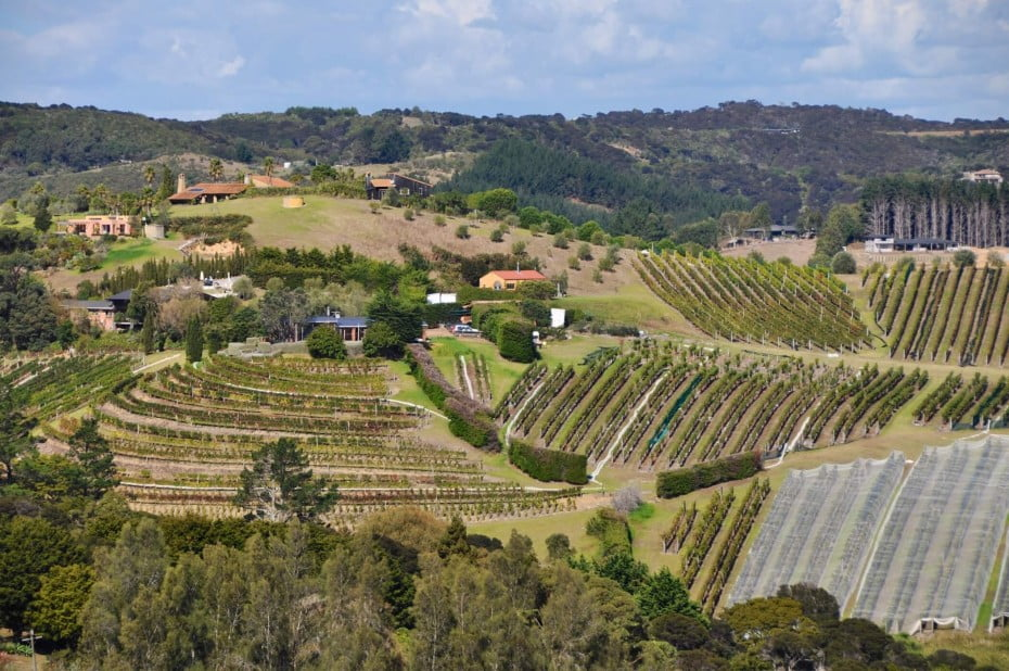 Te Whau WineryTe Whau Vineyard is situated on an 11 hectare property on Waiheke Island at the eastern headland of Putiki Bay and at the end of Te Whau Peninsula.