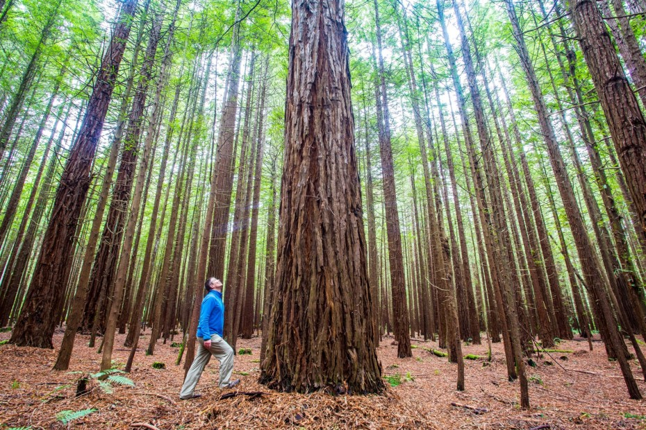 With a range of exotic tree species including the towering California Coast Redwoods you're guaranteed to capture a postcard-worthy post for your social media.