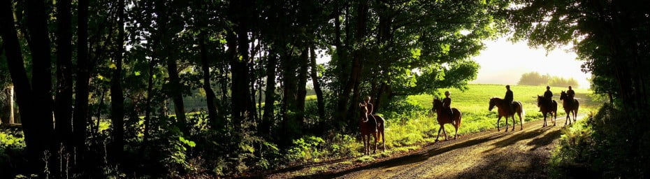 Horse trekking in Peel forest, New Zealand.