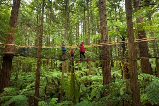 Redwoods Treewalk, Rotorua.