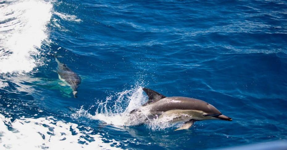 Dolphins, Tauranga, New Zealand.