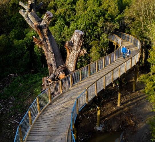 NZ Palmerston North - Keeble's bush crossing
