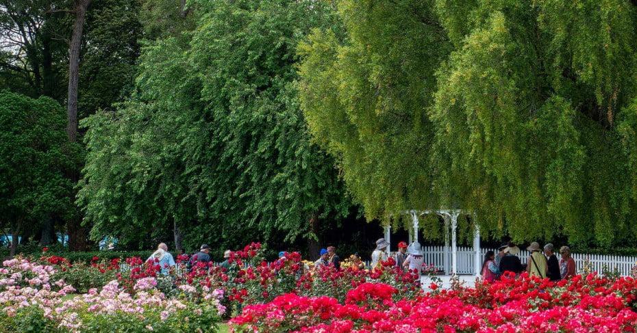 NZ Palmerston North - Dugald MacKenzie Rose Garden