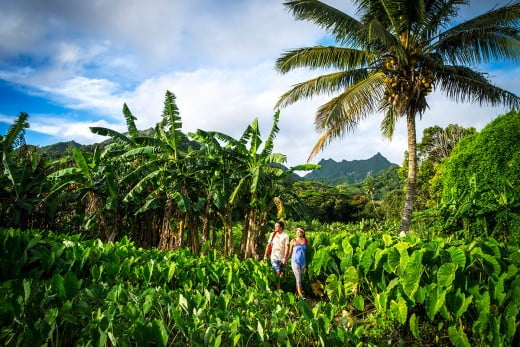 Couple hiking along a lush bush, Rarotonga, Cook Islands.
