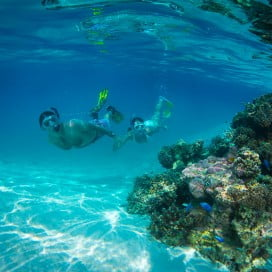 A couple snorkelling observing a reef, Rarotonga, Cook Islands.