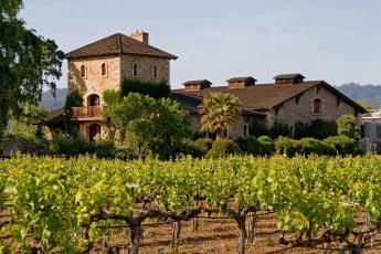Vineyard, Napa Valley, California, USA.