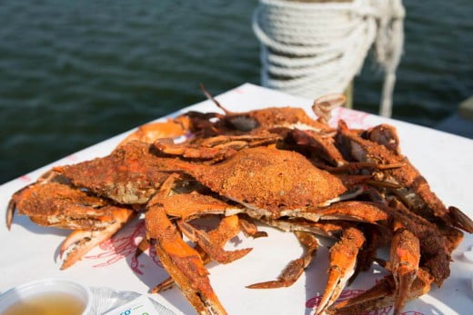 Maryland blue crabs in Chesapeake Bay.
