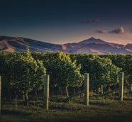 뉴질랜드 와인