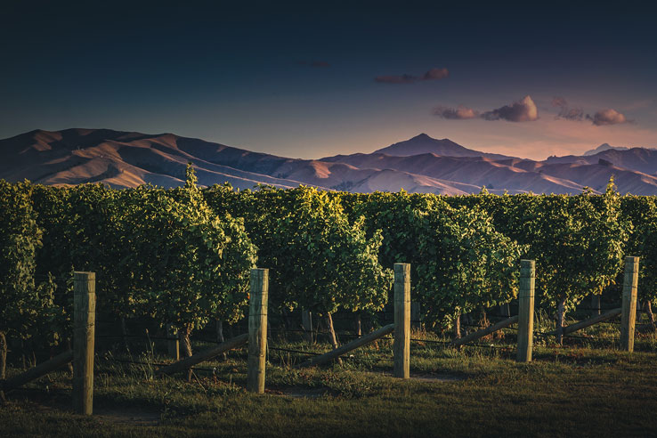 Fine Wines, Te Mata Peak, New Zealand.