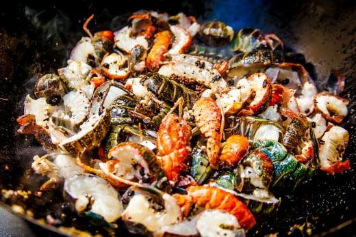 Red claw crayfish, Sunshine Coast, Australia.