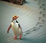 新西蘭動物誌 尋找「牠」鄉的故事
