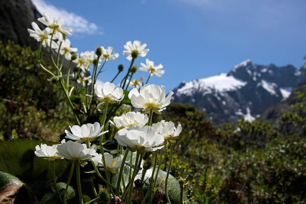 ニュージーランドの主な世界遺産 - マウントクック