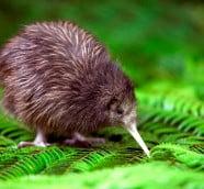 ニュージーランドで出会える野生動物たち