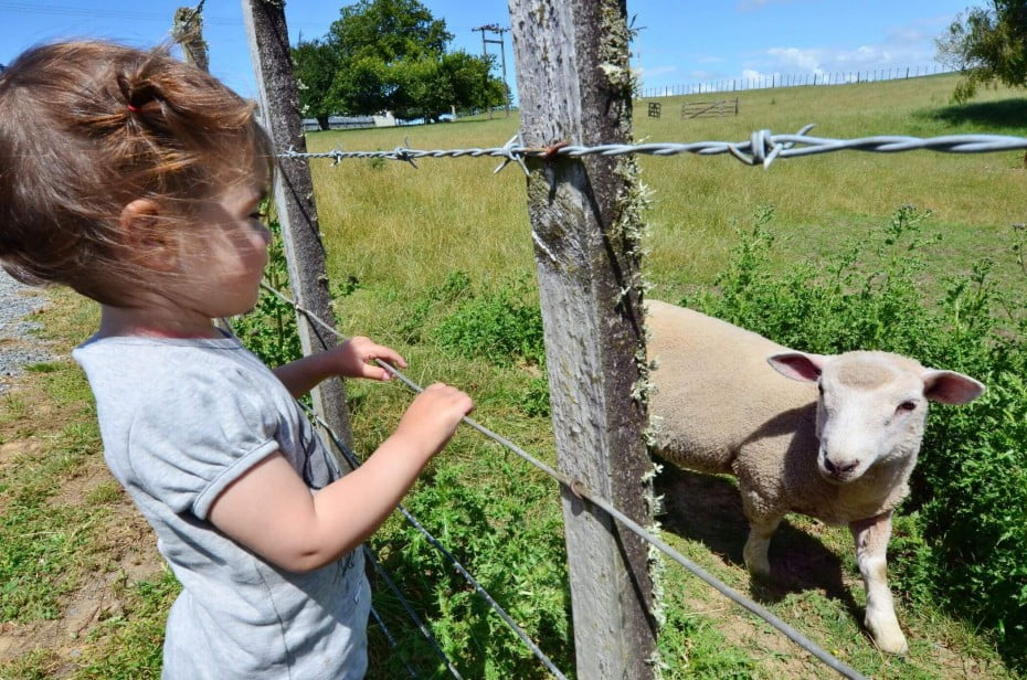 美しい季節 春のニュージーランド - 子羊の季節