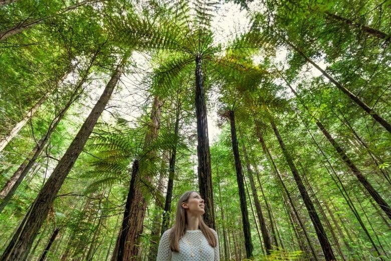 マオリ伝統が息づくロトルア(Rotorua)の旅 - レッドウッド