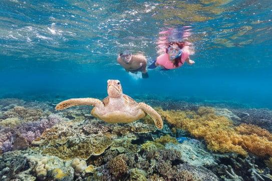 Snorkelling in Great Barrier Reef, Queensland, Australia.