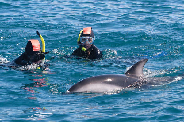 New Zealand - Dolphins Encounter, Kaikoura