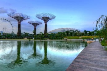 Gardens by the Bay, Pond with Supertrees Reflections, Singapore