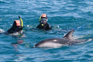 Dolphin Encounter, Kaikoura, New Zealand