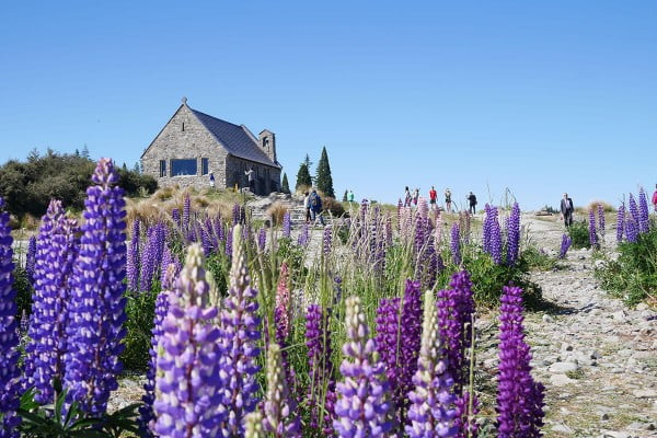 New Zealand - Church of Good Shepherd, Lake Tekapo